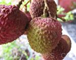 法國人也愛的台灣水果《荔枝》(攝影: ALEX/ 大紀元)