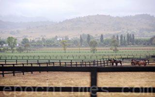 澳洲纽省第四匹马证实死于亨德拉病毒