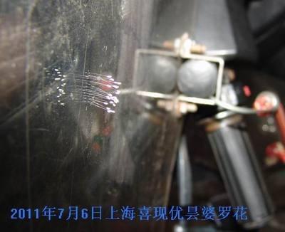 上海喜现优昙婆罗花在一电动车挡风板上