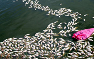 鱼塭电线被窃  业者损失重