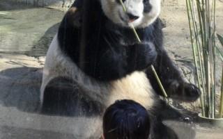 美东地震前后 动物园动物行为异常