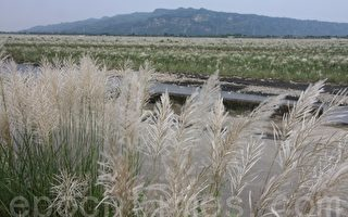 台灣古典詩:詠濁水溪