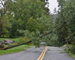 图:艾琳飓风造成无数树断屋损,交通堵塞。右图为宾州德拉华郡史密斯桥(Smithbridge Road)路上的一颗断树。(大纪元)