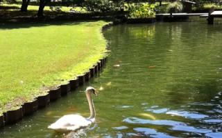 秋日好去处:孟菲斯植物园的乐趣