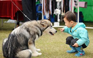 研究:初生第一年接触宠物可降低过敏