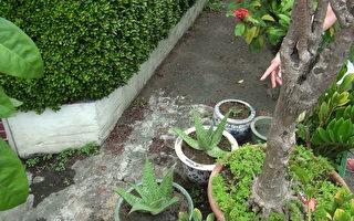 园艺爱好者却偷他人现成盆栽