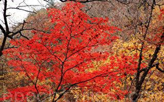 组图:韩国芳台山枫叶美景