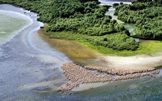 组图:罗马尼亚多瑙河三角洲生态警讯