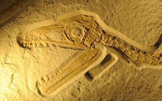 最完整恐龙化石 慕尼黑展出