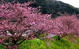 春天之樹( 大紀元)