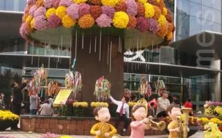 美籍華人在韓國:首爾的江南菊花展