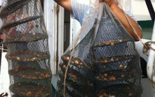 山東漁民狀告康菲與中海油 索賠2千萬