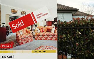 社交距离限制放宽 澳洲房屋拍卖清出率大增