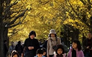 圖片新聞:東京銀杏大道 秋意正濃