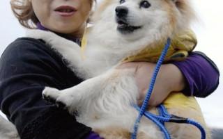 26歲8個月  最長壽狗走了
