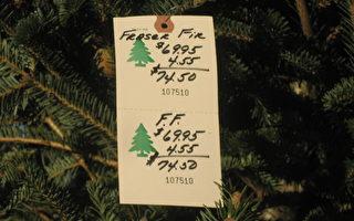 今年全美聖誕樹的消費開支將上升3.1%,達到34億美元,達到自2008年經濟衰退以來的最高水平。(攝影:李惟智 / 大紀元)