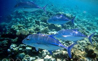 组图:马尔代夫海底世界 热带鱼和珊瑚礁(一)