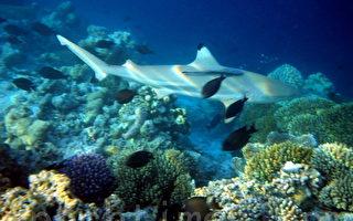 组图:马尔代夫海底世界 热带鱼和珊瑚礁(三)
