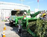 在「聖誕樹碎木慶典」新聞發佈會上,現場演示如何用碎木機處理聖誕樹。(攝影:何真/大紀元)