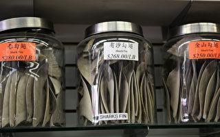 澳洲環保人士反對食用魚翅 吁立法取締