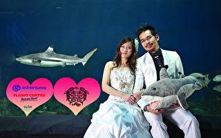 「無魚翅」婚宴競賽 情人節新節目