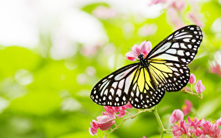 輪迴思索:店裡的蝴蝶