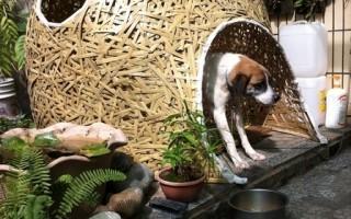 傳統竹材新可能   阮建彰戶外藝術創作個展