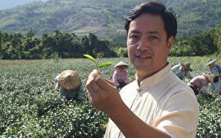 台优质茶专区 生产在地好茶