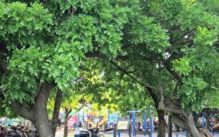 大埤乡老人日托中心外围树木林立,还有许多游憩设施。(摄影:刘美兰/大纪元)