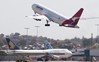 澳飛行真危險 鳥擊外加撞袋鼠
