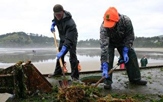 俄勒岡州魚類和野生動物署的志願者工作人員用鐵鍬,耙子和其他工具把來自日本海嘯的漂流物先刮乾淨。(AFP PHOTO / Oregon Parks and Recreation )
