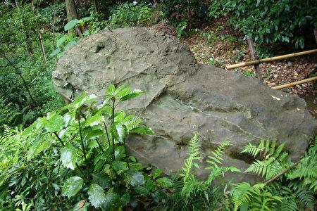 不管從哪側去看,看來看去都是魚的模樣的奇石。(攝影:容乃加/大紀元)