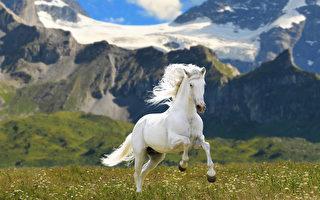轮回故事:有良心的马 转生为县令