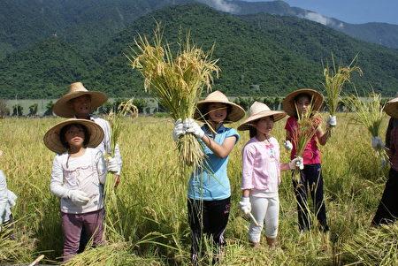 老农友让小农友拿起一把稻穗,正好就是一碗白米饭量。(詹亦菱 /大纪元)