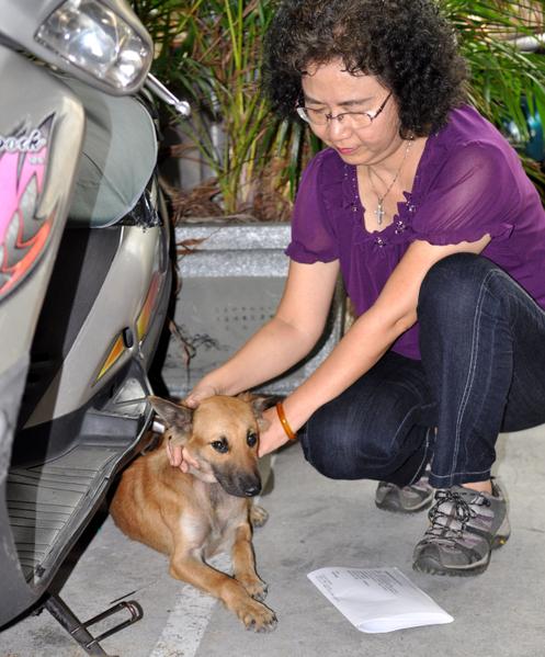 1隻小黃狗1週前出現在台中市一處機車停車場內,疑遭主人棄置,在原地苦苦守候主人。台灣動物緊急救援小組據報29日前往營救,送往動物醫院安置。(台灣動物緊急救援小組提供)