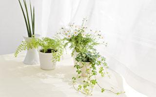 九種實用的室內植物 令陽台和客廳煥然一新