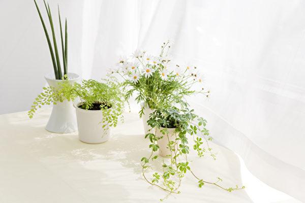 九种实用的室内植物 令阳台和客厅焕然一新