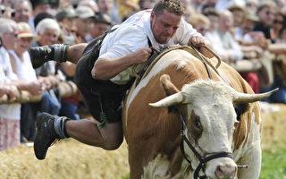 组图:巴伐利亚赛牛节 非常巴伐利亚味