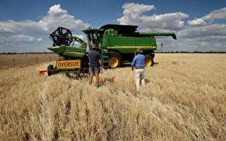 研究:父母吃转基因小麦 子女活不过5岁