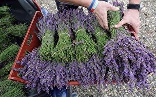 十種常見天然植物香料 為美味與健康加分