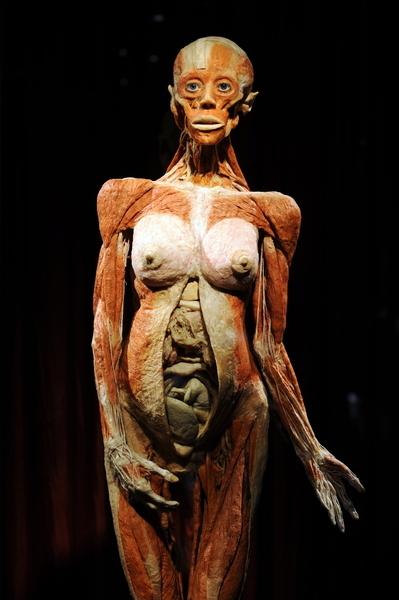 """大连""""冯•哈根斯生物塑化公司""""近几年在全球进行""""人体世界""""的尸体巡回展览,但至今仍无法说清展览的尸体来源。(AFP PHOTO / GABRIEL BOUYS)"""