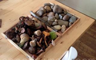 陈美华:中秋节的蘑菇和石头!