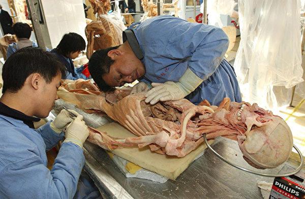 大连的冯·哈根斯生物塑化厂,工人正在加工尸体。( AFP)