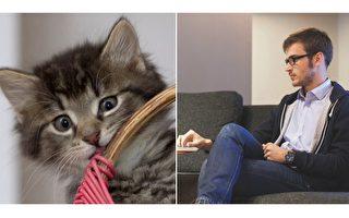 工作時看小貓小狗照片 竟有意想不到的好處