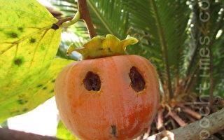 长在树上的柿子南瓜灯笼
