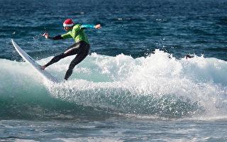 衝浪板遭鯊魚啃咬 悉尼南區4海灘關閉24小時