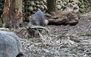 動物過冬百態 北市動物園揭祕