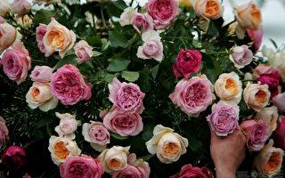 深情的玫瑰