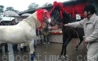 新竹市長 撮合馬匹當月老