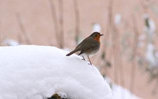 幫助小鳥過冬